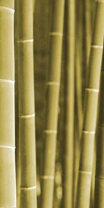 4_wood